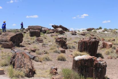 Petrified logs in the aptly named petrified forest