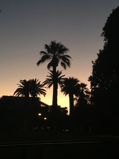Evening and palm trees