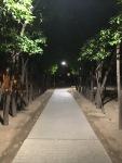 Gila Orange Grove