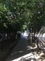 Haunting the Orange Grove