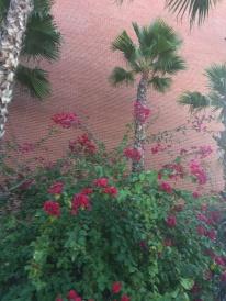 Harvill Building flora