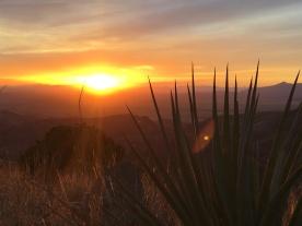 Sun through the yacua