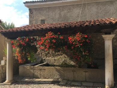 Fuchsia by the fountains
