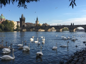 Swans enjoying the afternoon sun