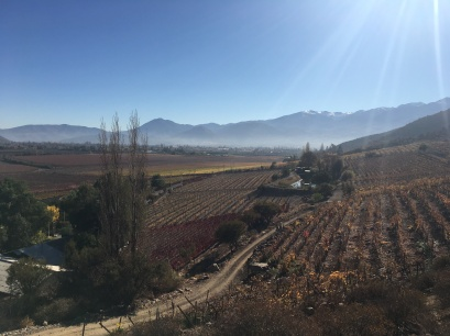 Andean vineyars
